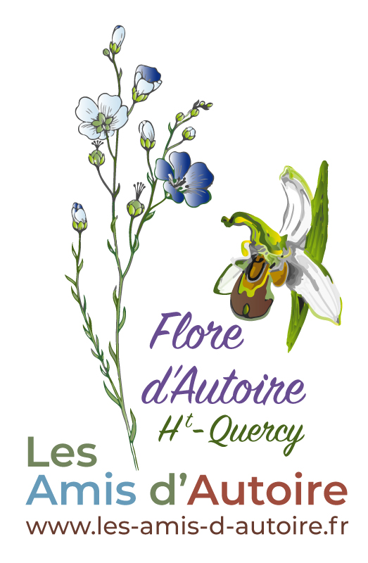 logo Ami Autoire